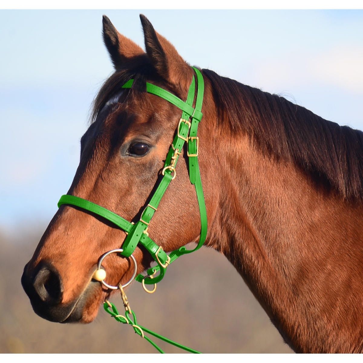 Lime Green Traditional Horse Halter With Bit Hangers For Sale Twohorsetack