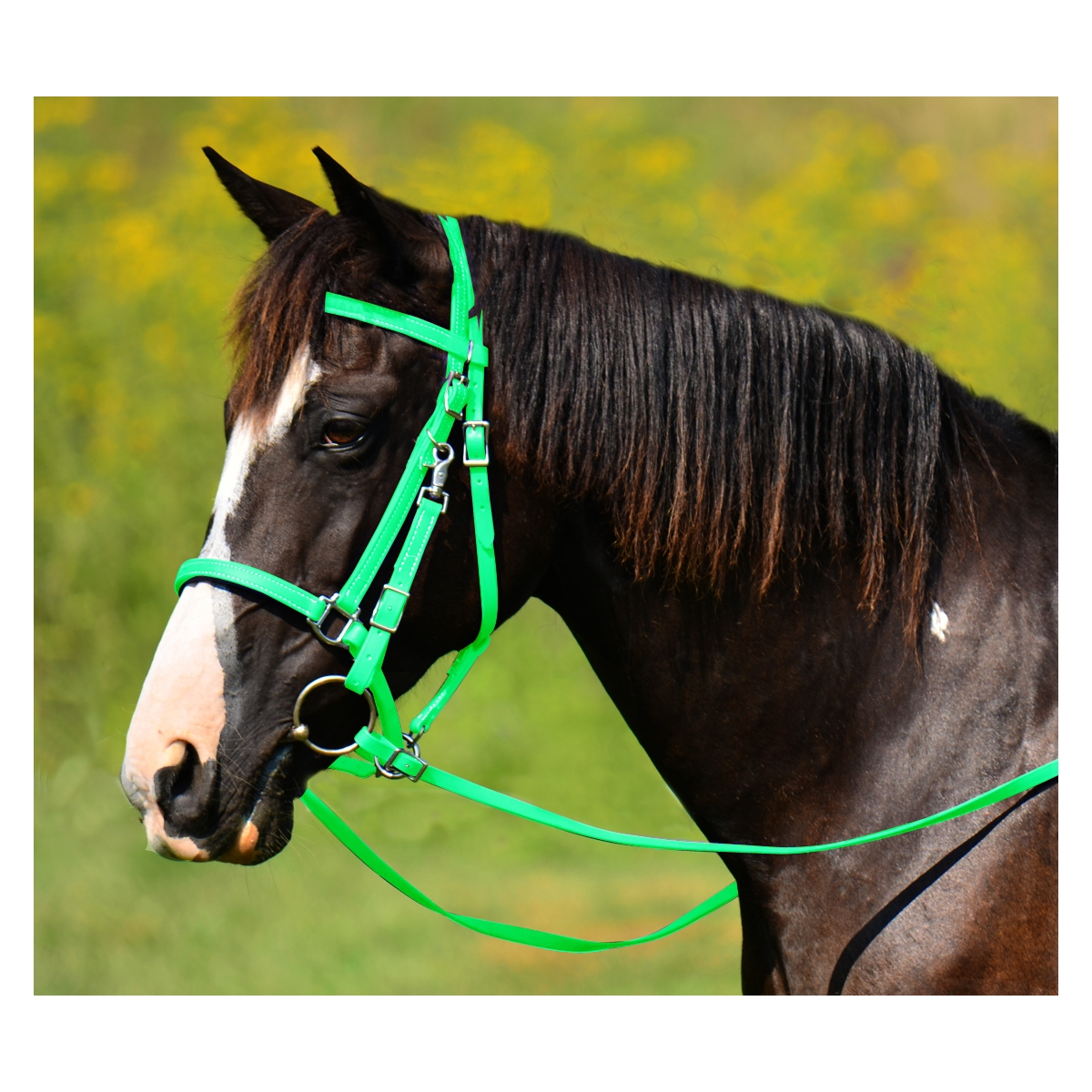 Lime Green Traditional Halter Bridles With Bit Hanger Two Horse Tack