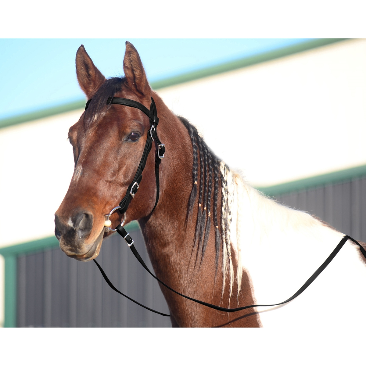 Order Black Browband Western Bridle For Horses From Two Horse Tack