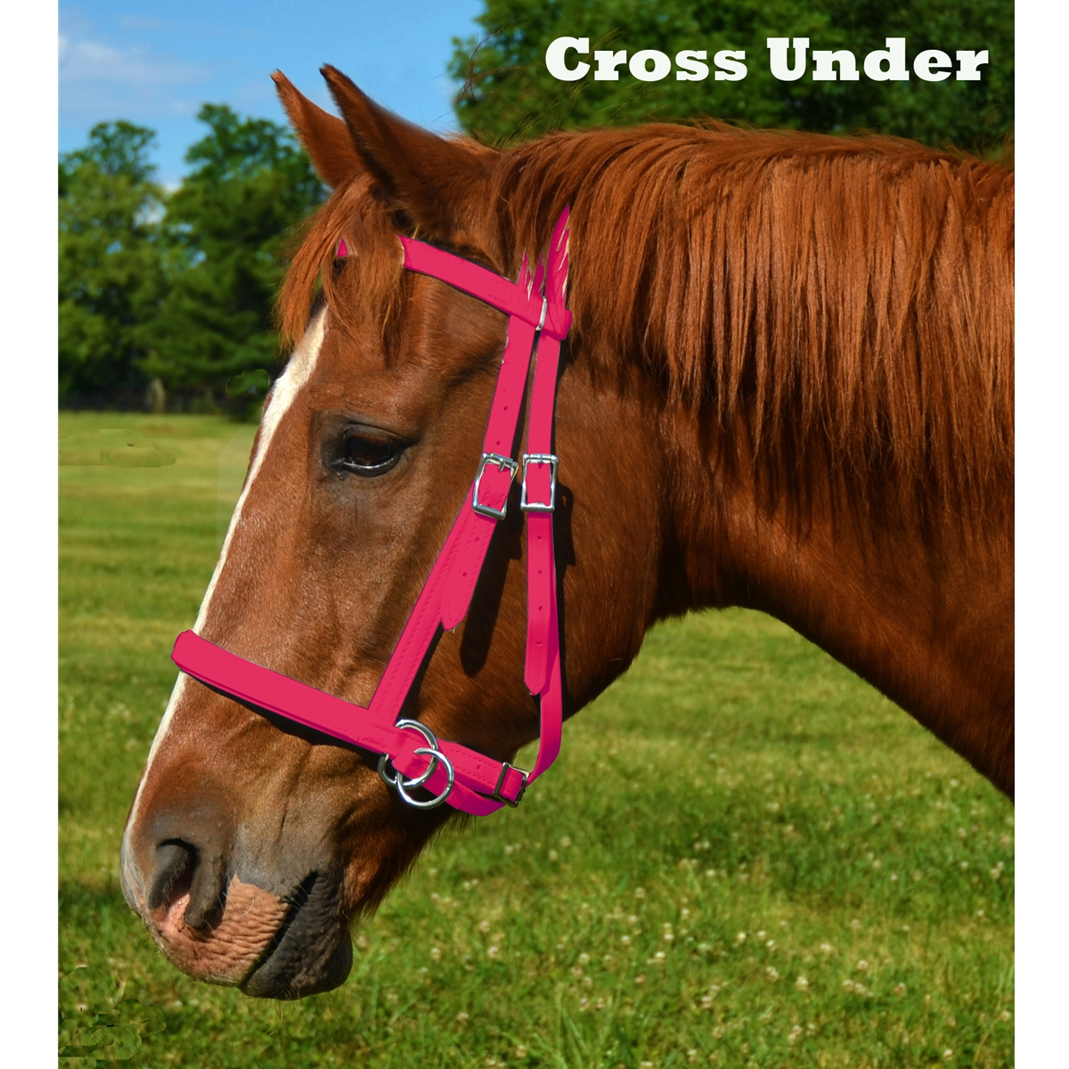 Buy Top Quality English Bitless Bridles For Horse At Two Horse Tack