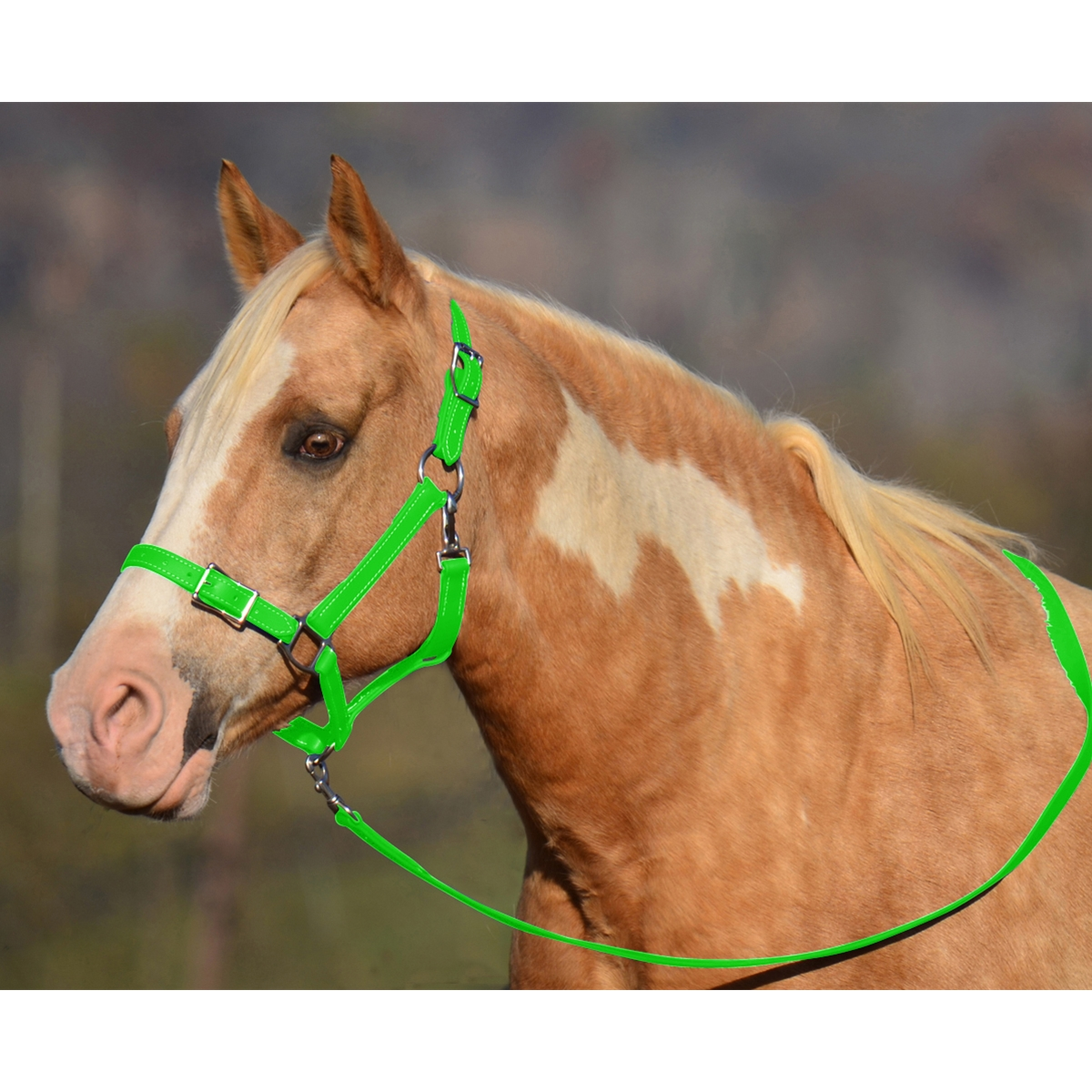 Buy Lime Green Buckle Nose Safety Halter For Sale At Two Horse Tack