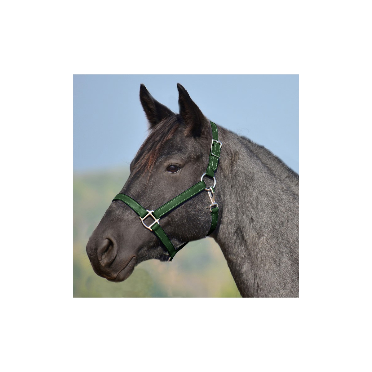 Hunter Green Turnout Halter Lead Two Horse Tack