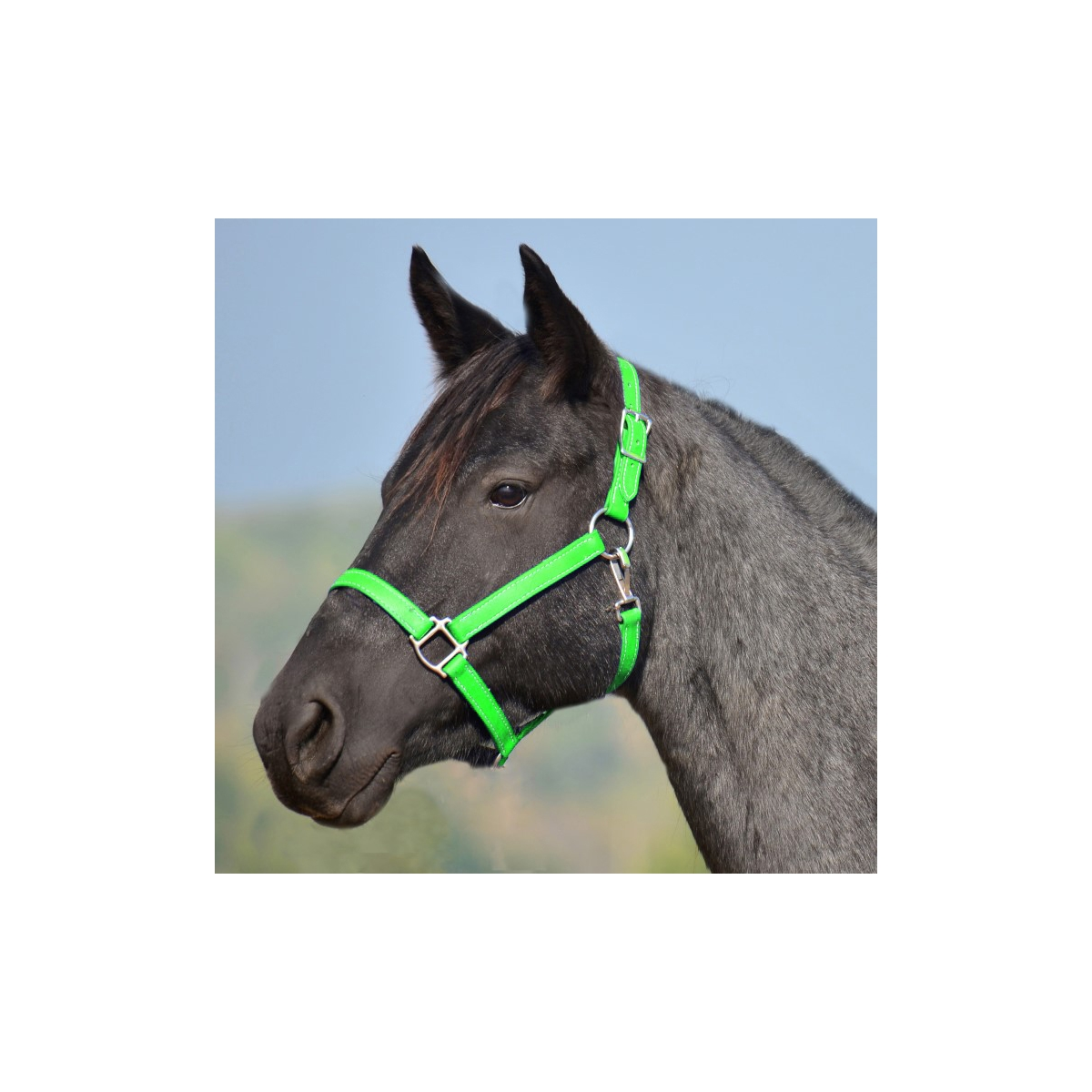 Two Horse Tack Lime Green Turnout Halter Lead