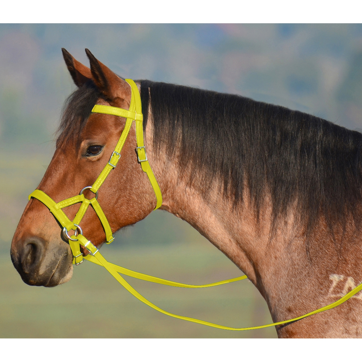 Order Sunflower Yellow Sidepull Bitless Bridle Only At Two Horse Tack