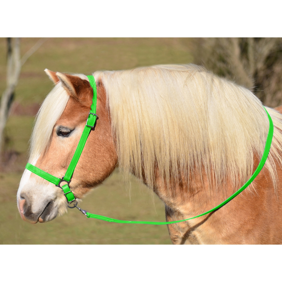 Lime Green Grooming Halter Lead Two Horse Tack