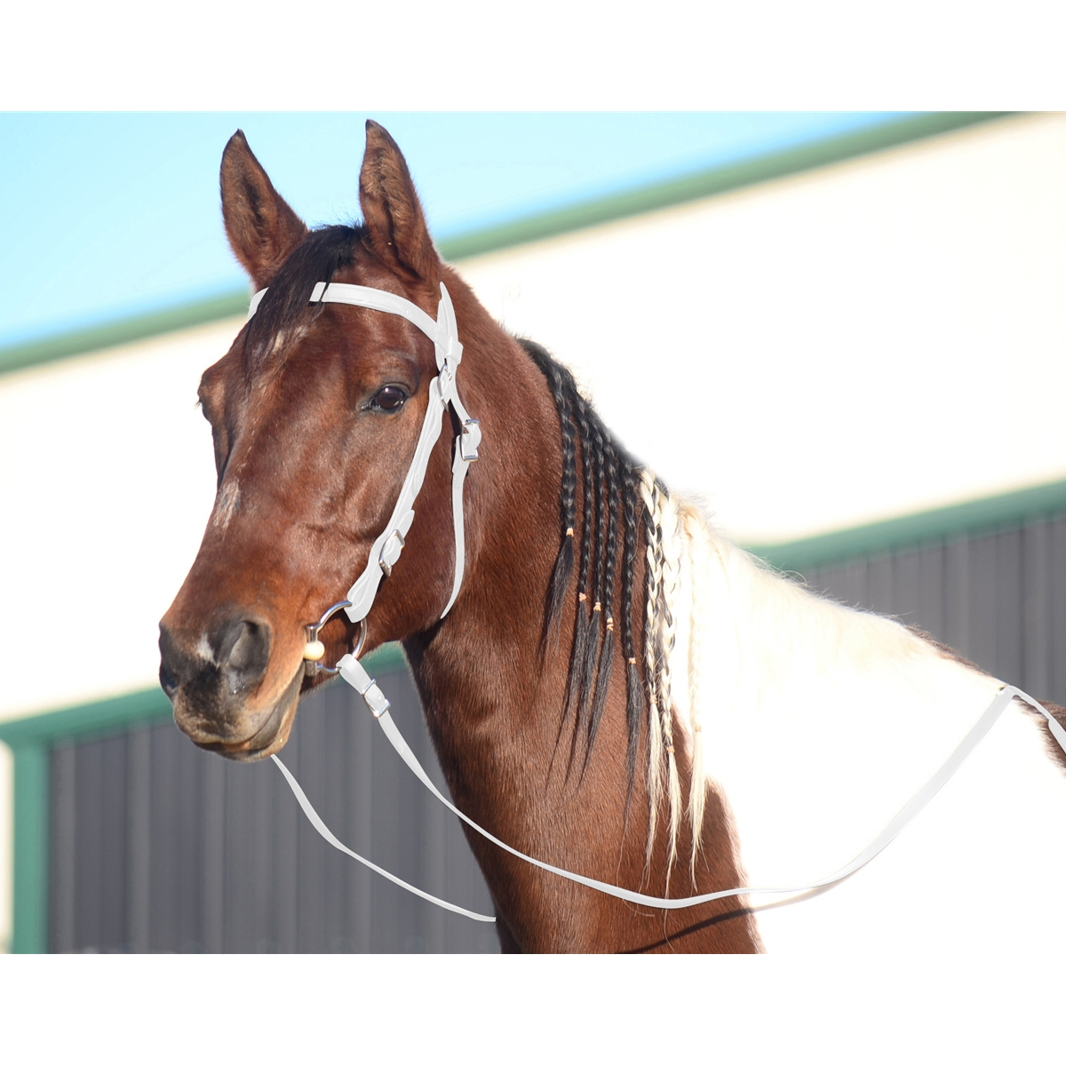 Perfect White Western Bridles Made From Beta Biothane Two Horse Tack