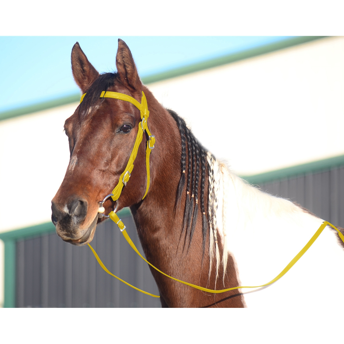 Shop Western Horse Bridles For Sale At Two Horse Tack