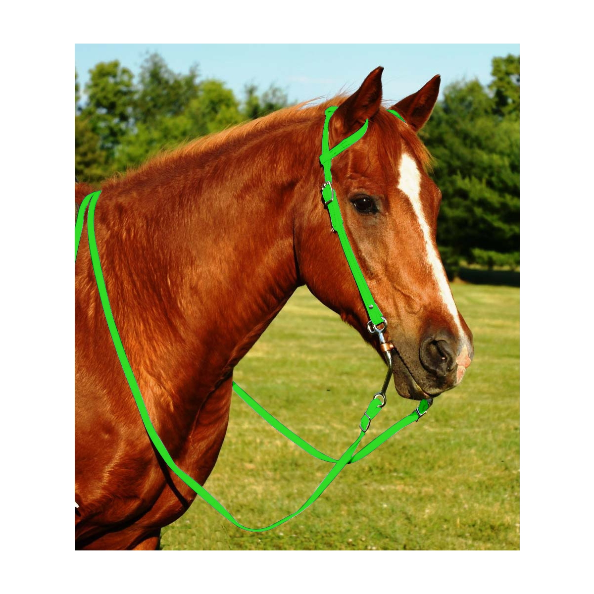 Lime Green Western Bridle For Sale Two Horse Tack