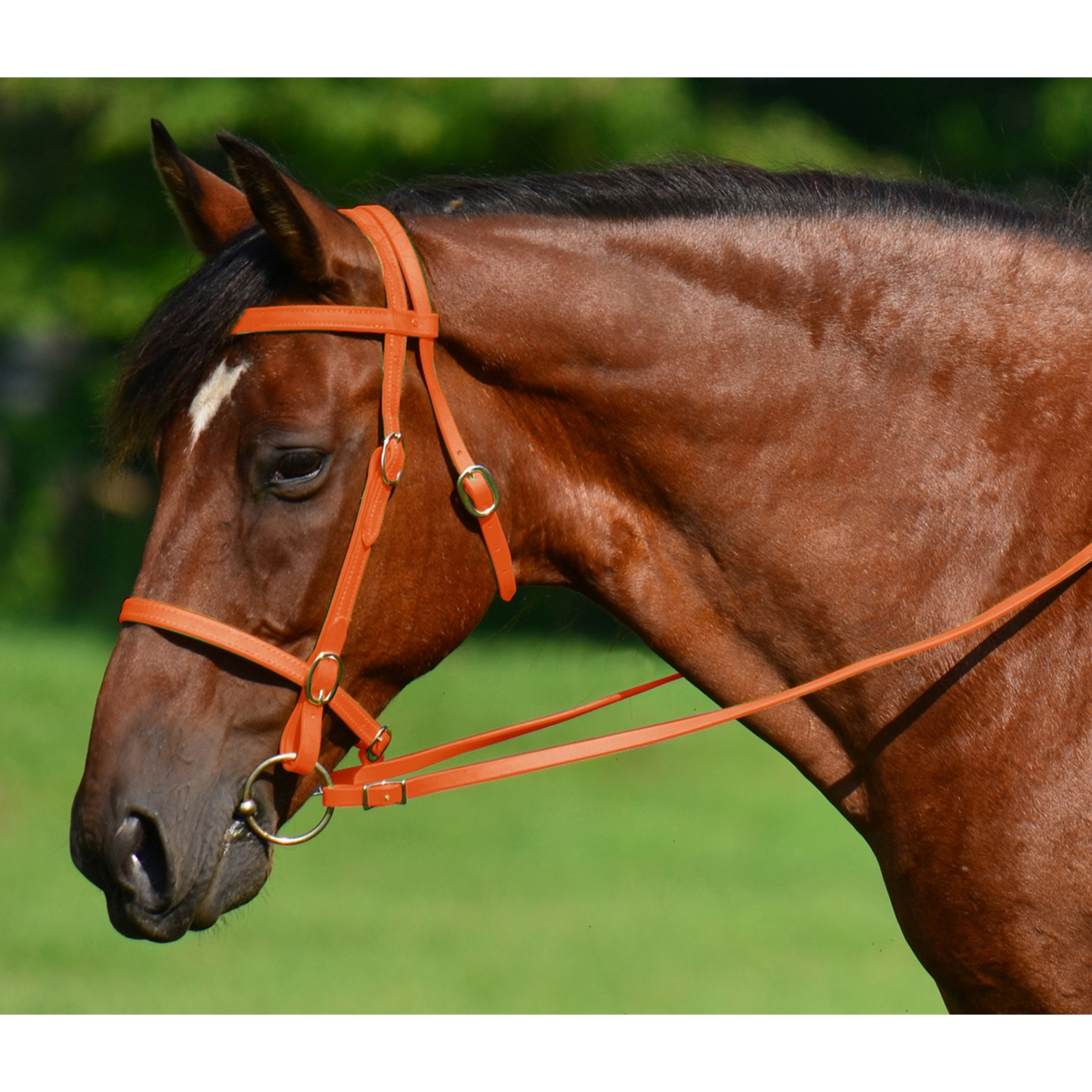 Bright Orange English Convert A Bridle Two Horse Tack