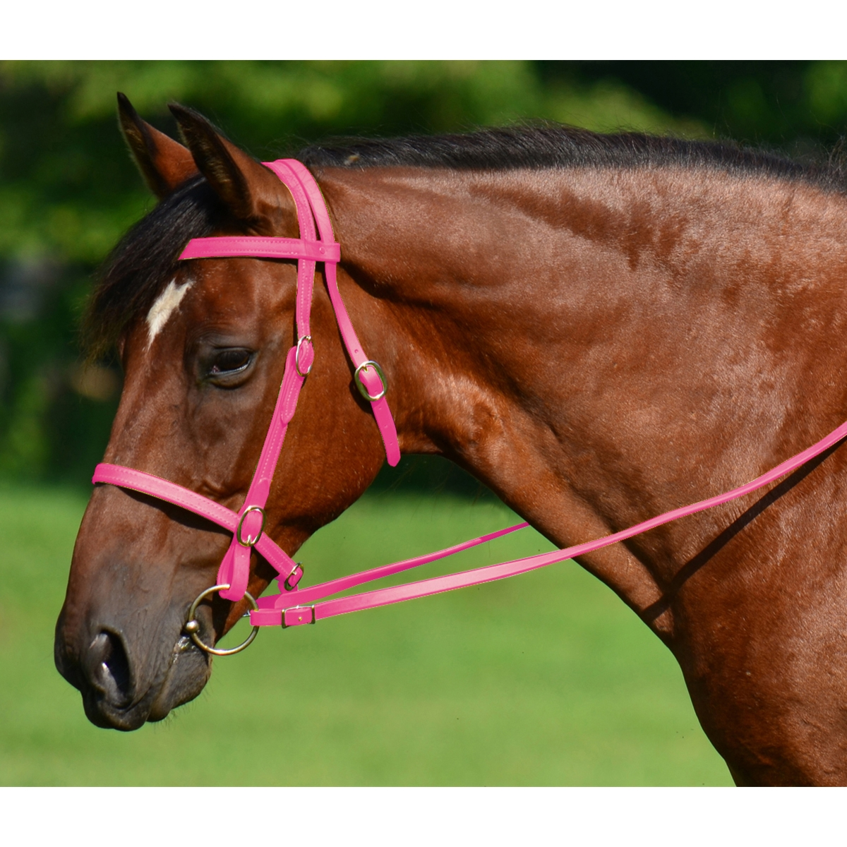 Buy Pink English Bridles For Sale From Two Horse Tack