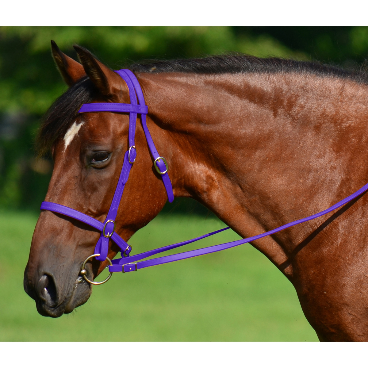 Reins for horses flat easy
