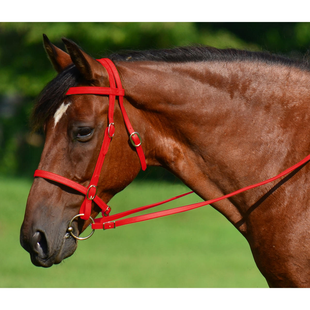 Red English Convert A Bridle Two Horse Tack