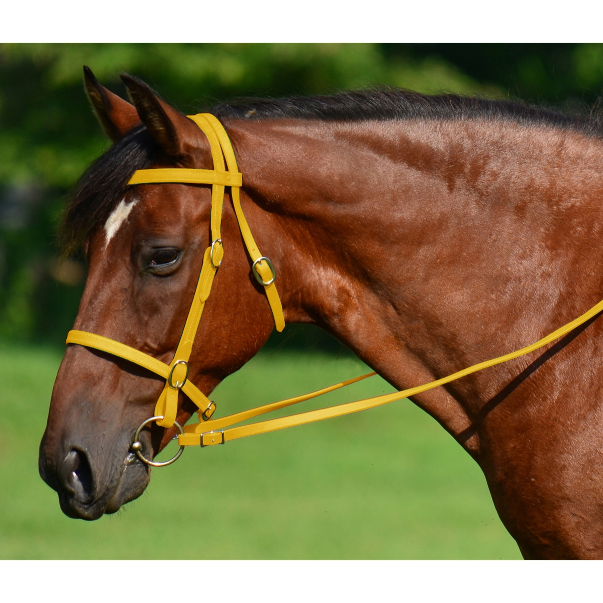 Yellow English Horse Bridles For Sale Two Horse Tack