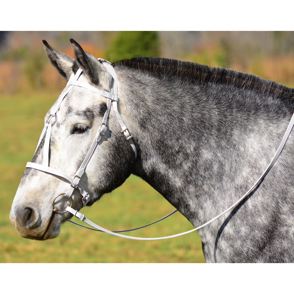Get White Medieval Bridle Horses Online Two Horse Tack
