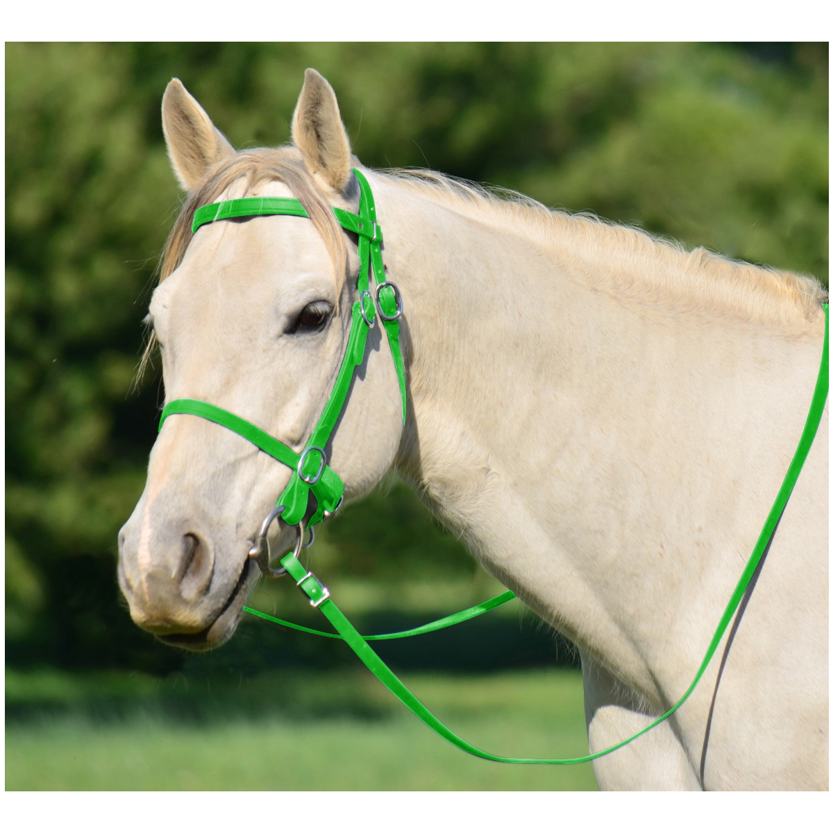 English Horse Bridles Headstall Two Horse Tack