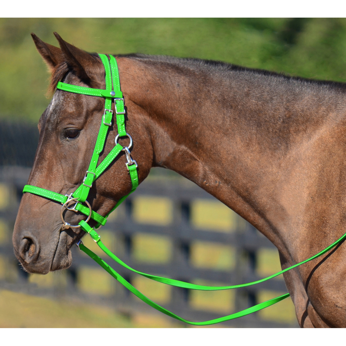 Lime Green Halter Bridle Lead For Horses Two Horse Tack