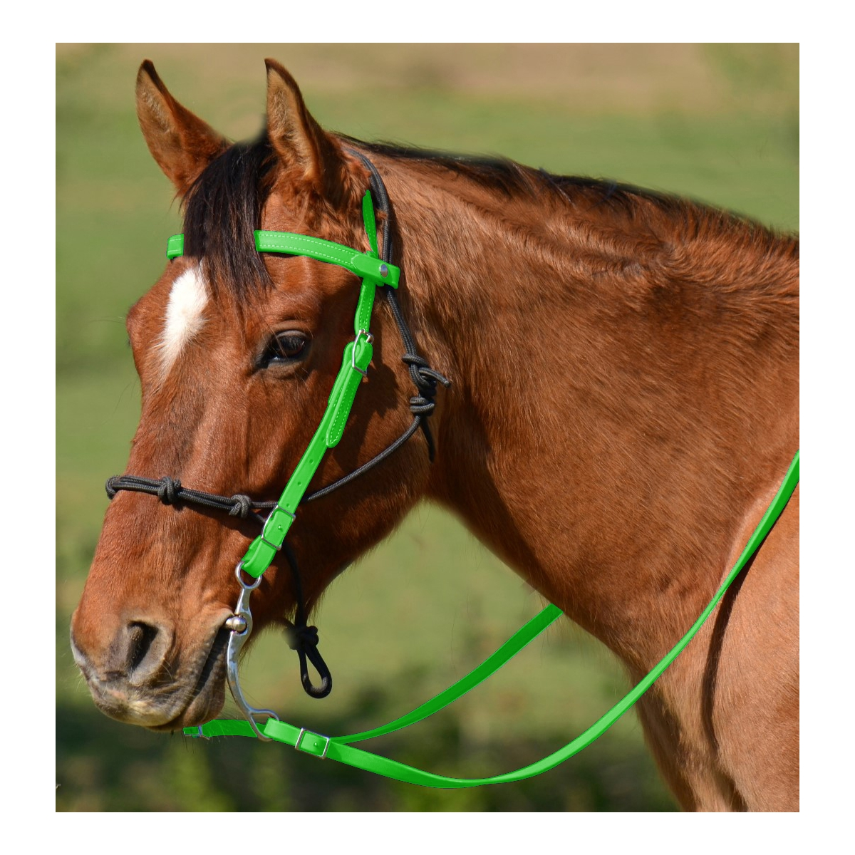 Browband Western Bridle With Noseband For Sale Two Horse Tack