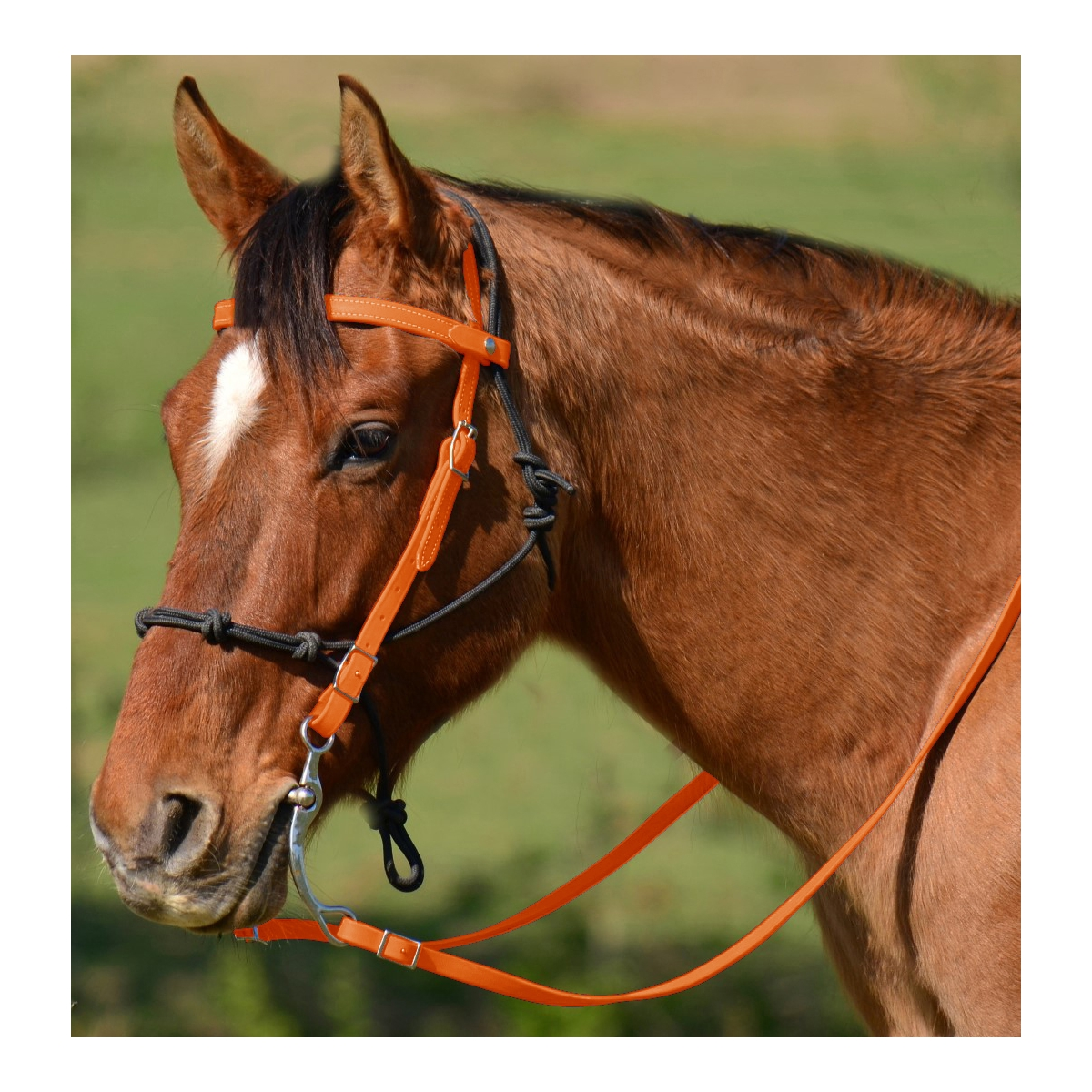Shop Orange Western Bridle Made From Beta Biothane Two Horse Tack