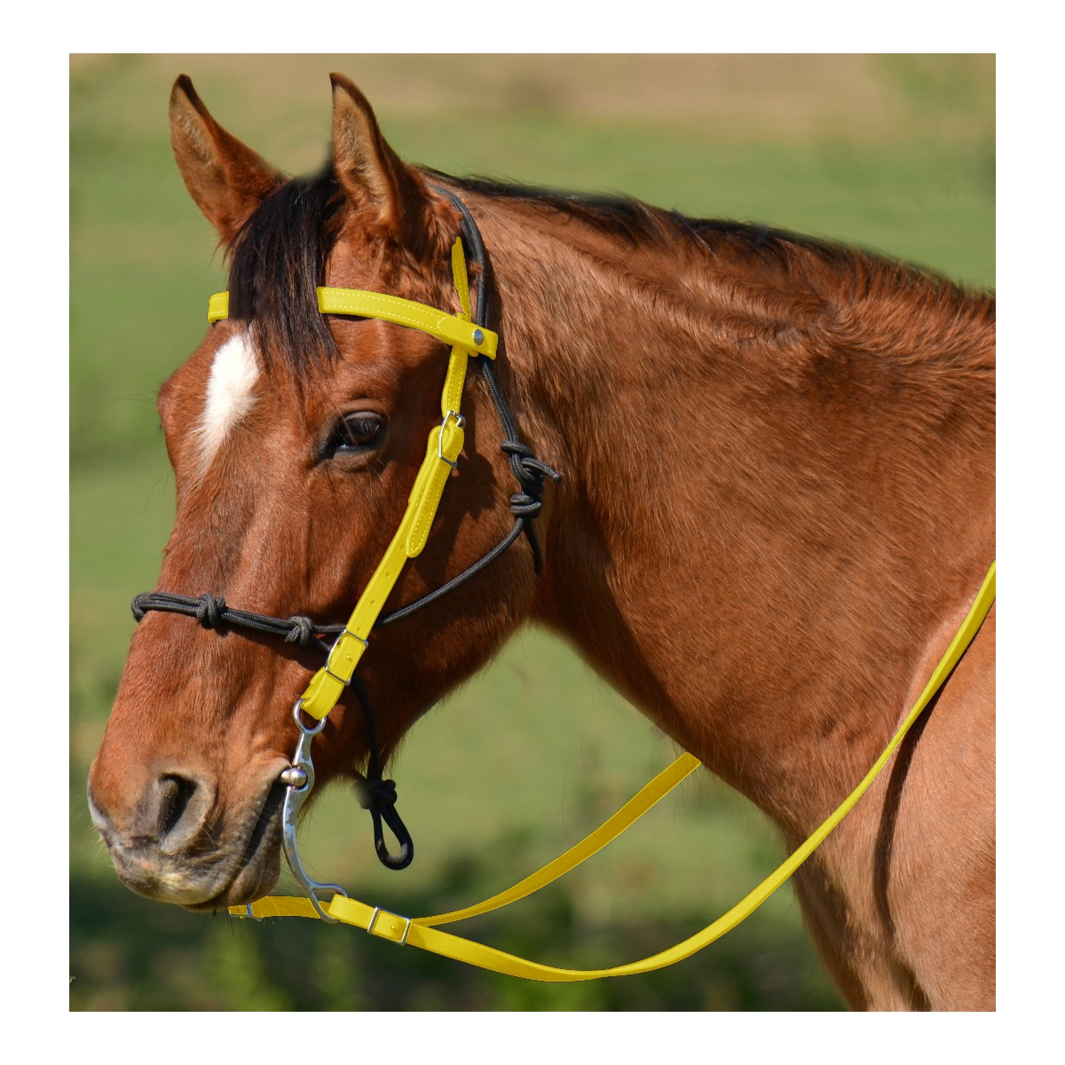 Buy Sunflower Yellow Browband Western Bridle Two Horse Tack