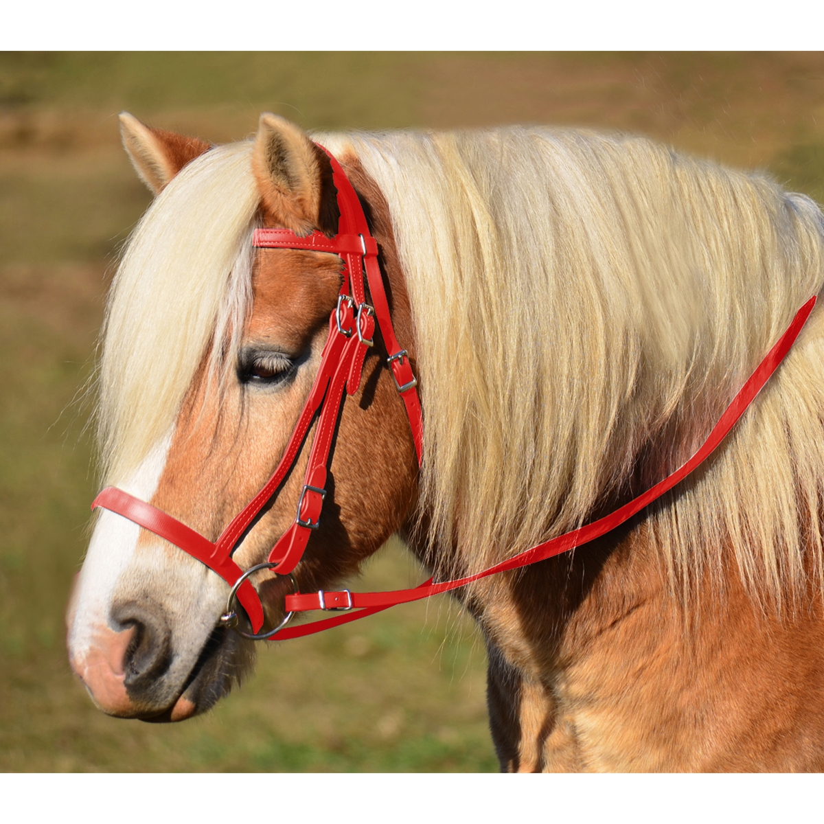 Purchase Red English Hunt Bridle From Two Horse Tack