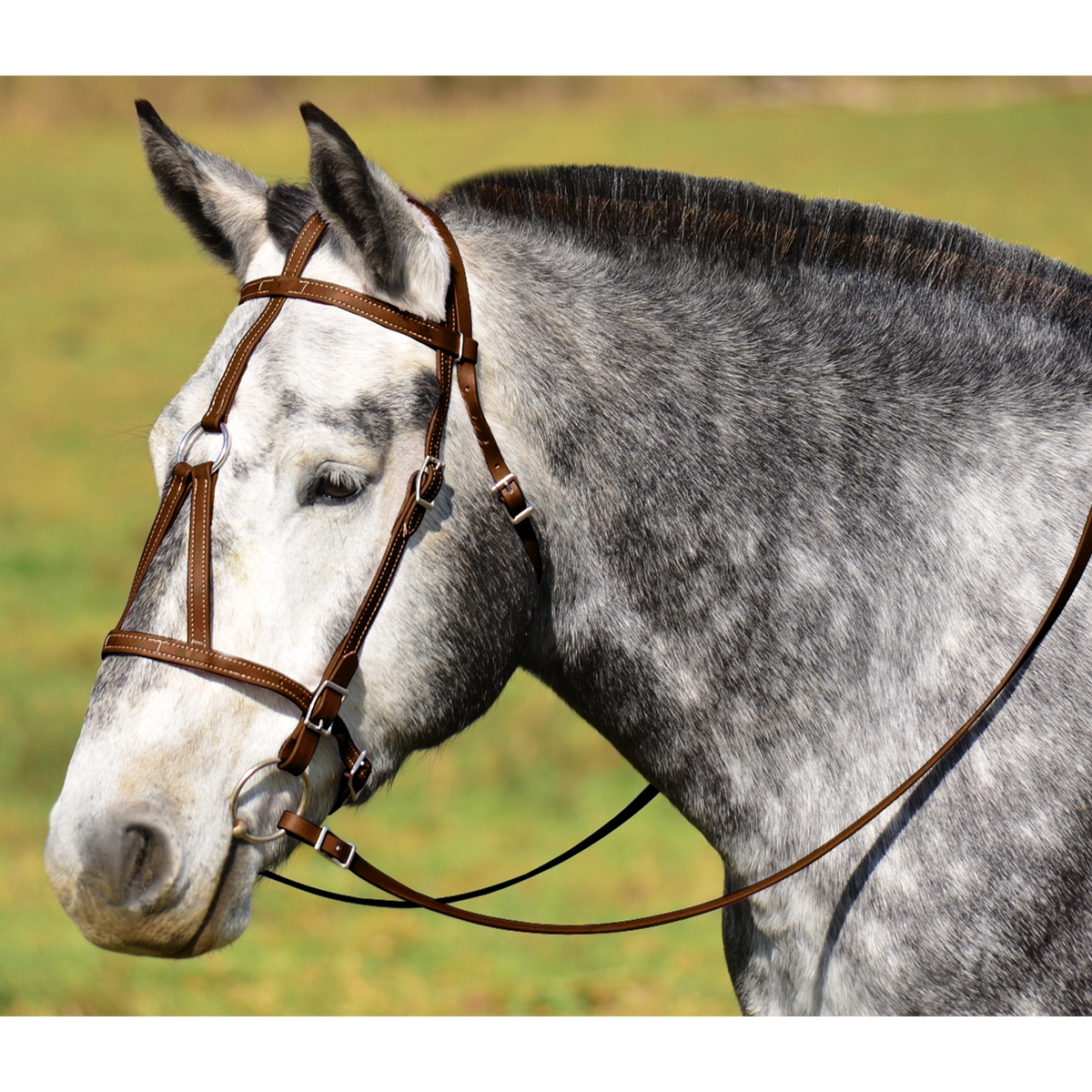 Order Warmblood Size War Or Medieval Horse Bridle Online From Two Horse Tack