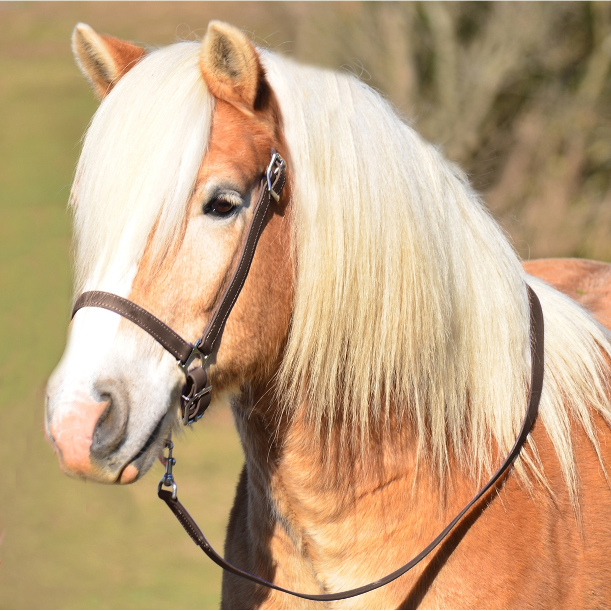 Buy Grooming Halter In Draft Horse Size From Two Horse Tack