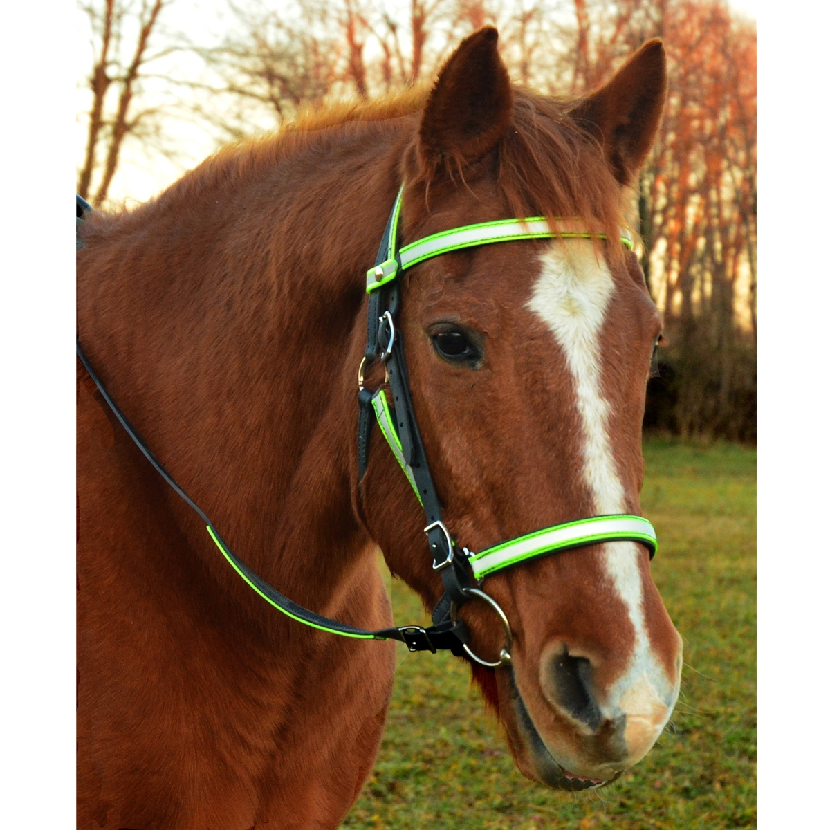 Horse Halter Bitless Bridle For Sale At Two Horse Tack