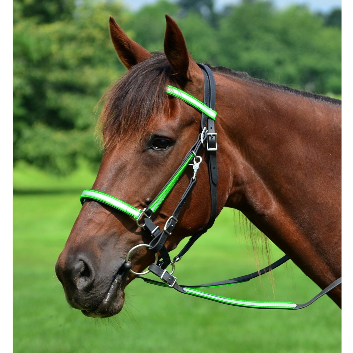 Shop Top Quality Halter Bridles With Reflective Day Glo From Two Horse Tack