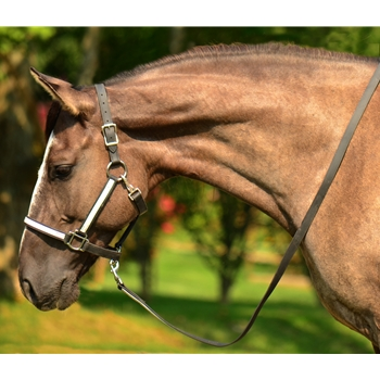 *RISK FREE DEMO PROGRAM* Beta Biothane Halter