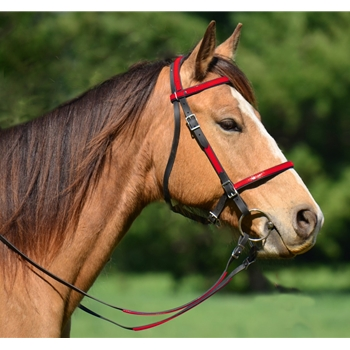 PICNIC BRIDLE or SIMPLE HALTER BRIDLE made from Beta Biothane (Any 2 Color Combo)