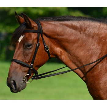 BLACK ENGLISH CONVERT-A-BRIDLE made from BETA BIOTHANE
