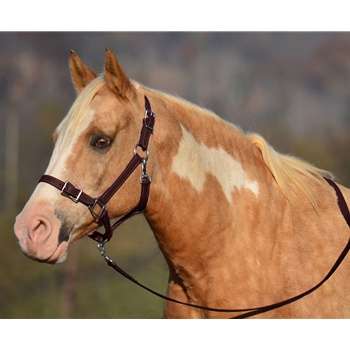 BROWN Buckle Nose Halter & Lead Beta Biothane