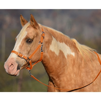 ORANGE Buckle Nose Halter & Lead Beta Biothane