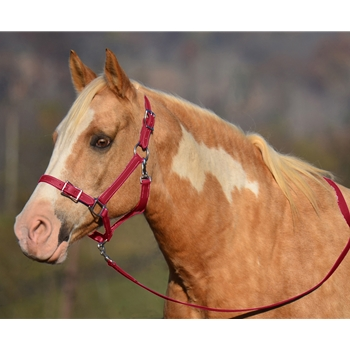 WINE Buckle Nose Halter & Lead Beta Biothane