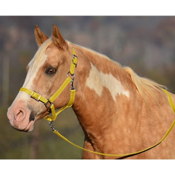 YELLOW Buckle Nose Halter & Lead Beta Biothane