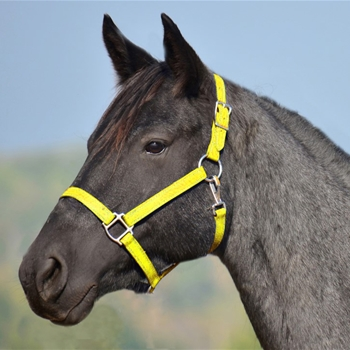 YELLOW HALTER & LEAD made from BETA BIOTHANE (Solid Colored)