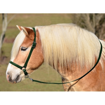 HUNTER GREEN GROOMING HALTER & LEAD made from BETA BIOTHANE