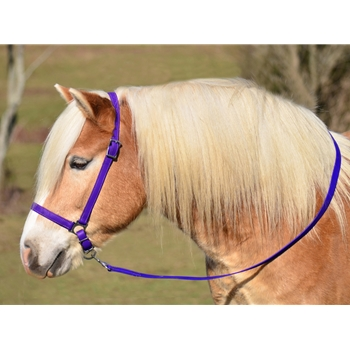 PURPLE GROOMING HALTER & LEAD made from BETA BIOTHANE