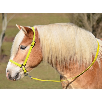 YELLOW GROOMING HALTER & LEAD made from BETA BIOTHANE