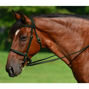 HUNTER GREEN ENGLISH CONVERT-A-BRIDLE made from BETA BIOTHANE