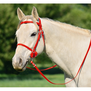 RED PICNIC BRIDLE or SIMPLE HALTER BRIDLE made from Beta Biothane