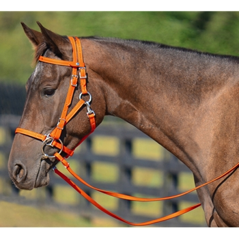 ORANGE Quick Change HALTER BRIDLE with Snap on Browband made from BETA BIOTHANE