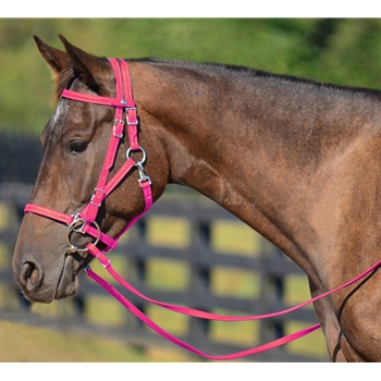 PINK Quick Change HALTER BRIDLE with Snap on Browband made from BETA BIOTHANE