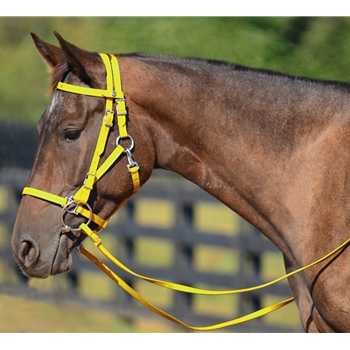 YELLOW Quick Change HALTER BRIDLE with Snap on Browband made from BETA BIOTHANE