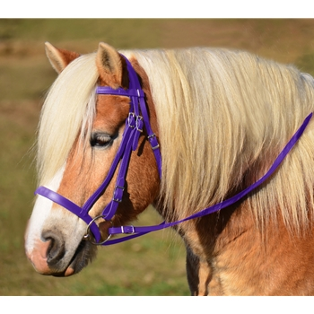 PURPLE ENGLISH HUNT BRIDLE Made from Beta Biothane