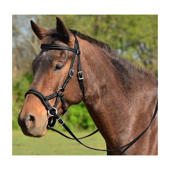 COB SIZE Sidepull Bitless Bridle made from BETA BIOTHANE
