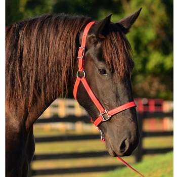 WARMBLOOD/THOROUGHBRED SIZE Turnout Halter made from BETA BIOTHANE