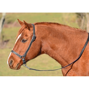HORSE SIZE Grooming Halter made from BETA BIOTHANE