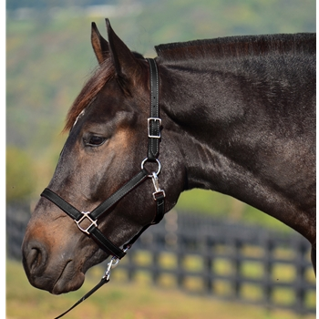 Turnout Halter in Black Beta Biothane (Small Pony Size)**Discount Tack**